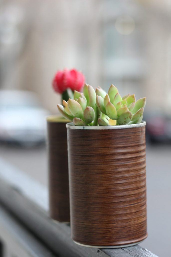 succulent plants in tin can