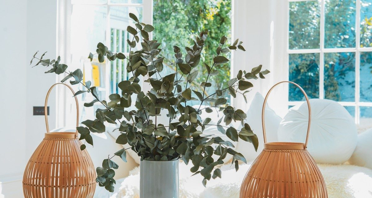 How to Bring Nature into Your Home with Biophilic Design