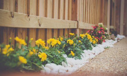 Easy, Breezy Gardening: Low Maintenance Design Ideas
