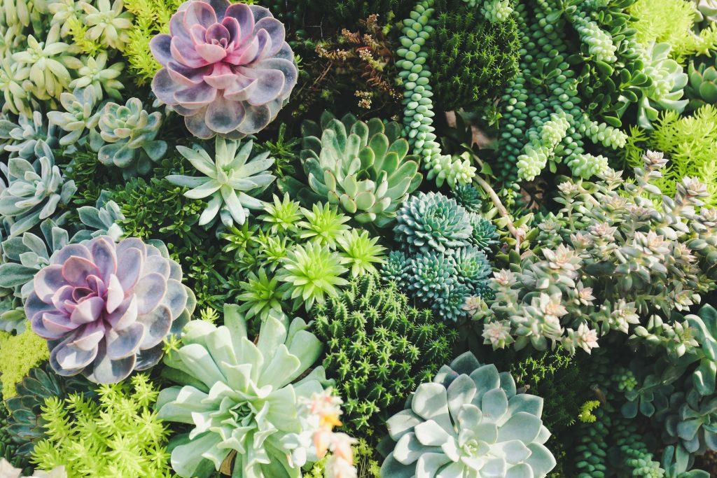 low maintenance succulents